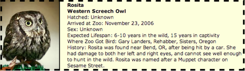 Rosita oregon zoo owl